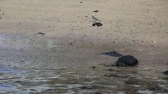 Little bird feeding on the beach Stock Footage