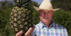 Countryman Show Close Up Ananas Fruit Fresh Ripe Pineapple Vegan Natural Dessert Stock Footage