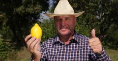 Farmer Thumbs Up Sign Recommend Yellow Lemon Vitamins Fruit Flavored Sour Taste Stock Footage