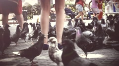 Girl feed the doves - stock footage