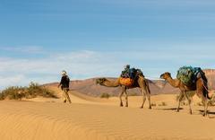 bereber leads camels through the desert, Morocco - stock photo