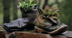 Farm – Old leather boots flower pot plant in the rain Stock Footage