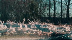 Ice in nature rose quartz color against water splashing Stock Footage