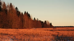Wide field and at the left the wood from dry trees and fir trees Stock Footage