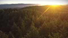 Aerial drone view over over pine forest and redwood forest in Big Basin Park Stock Footage