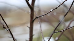 Withered tree branch with water droplets Stock Footage