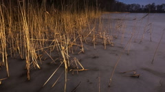 Reeds on frozen lake shore Stock Footage