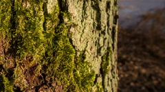 Tree trunk with bark structure Stock Footage