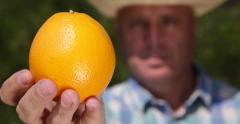 Exotic Fruit Farm Cultivator Give Best Orange Fruit Good Harvest Vitamins Diet Stock Footage