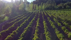 Aerial drone view of Flying over a wine vinyard in Napa, California Stock Footage