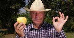 Farm Worker OK Hand Gesture Shown Best Sweet Whole Flavored Golden Apple Fruit Stock Footage