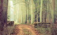 Stock Photo of country road in the forest on misty day