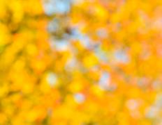 Autumnal Natural Background - stock photo