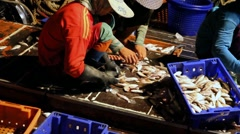 Sorting fishes from the fishing boat - stock footage