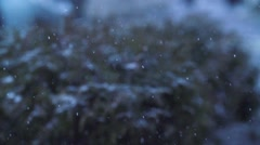The first snow in slow video Stock Footage