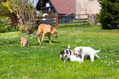 Mixed-breed cute little dog family. Stock Photos