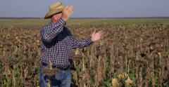 Farmland Upset Countryman Sunflower Harvest Disappointed Results Worst Culture Stock Footage