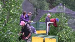 Apple harvest Stock Footage