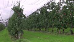 Apples growing on the farm Stock Footage