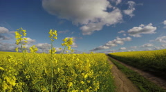 Fields of flowering rapeseed by the country road, 4K Stock Footage