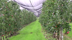 Apple production Stock Footage