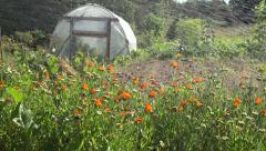 Vegetable garden irrigation, 4K Stock Footage