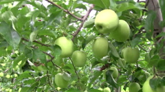 Apple tree farm Stock Footage