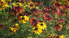 Flower garden irrigation, 4K Stock Footage