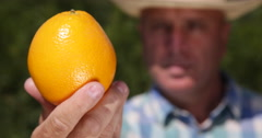 Farmer Recommend Nutritious Vitamins Healthy Dessert Close Up Orange Fruit View Stock Footage