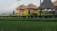 Idylic bungalow in rice fields,Vang Vieng,Laos Stock Footage