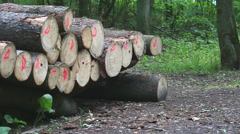 Stacked wood in forest. Full HD Stock Footage