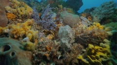 Cold Water Corals Temperate waters Stock Footage