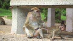 Funny video of monkey mother taking care of her baby Stock Footage