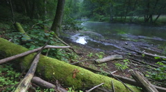 Wild river in summer forest. Polish river. Stock Footage