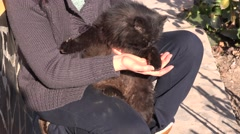 Full black cat fur, woman petting his animal outdoor, company for single people - stock footage