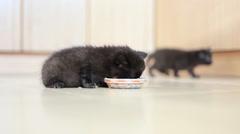 Little black kitten eats pate Stock Footage