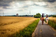 Riding Horse in Nature Field Stock Photos