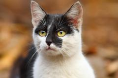 cute mottled cat portrait over out of focus background - stock photo