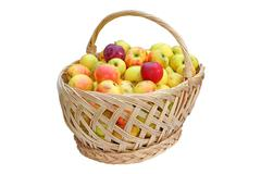 Traditional trellis basket full of bio apples isolation over white background Stock Photos