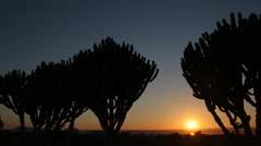 Silhouette of cactuses at sunset, Time lapse Stock Footage