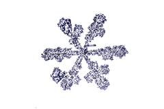Natural snowflake isolated on a white closeup Stock Photos