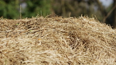 Close up camera pan amongst bales of straw Stock Footage