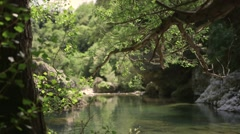 River seen through the woods Stock Footage