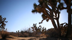 2axis Motion Control Tracking Time Lapse of Joshua Tree during Sunset -Long Shot Stock Footage