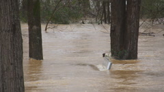 Flood waters overwhelm trees and bench Stock Footage