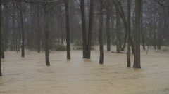 Trees submerged in flood waters Stock Footage