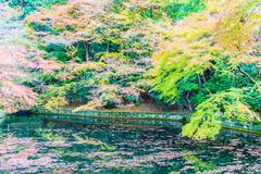 Autum season in japan Stock Photos