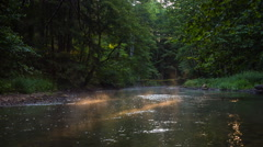 Wild river in summer forest Stock Footage