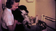 Washing Family Dog Pet Bathing Giving Bath 1960s Vintage Film Home Movie 9119 Stock Footage