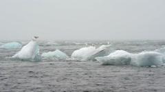 Blue icebergs floating on Jokunsarlon glacial lagoon Stock Footage